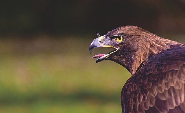 Águila: imagen que utilizaremos para remplazar a las demás